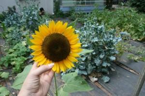 חן אדדי, טיפול בתזונה וצמחים למודעות ואנרגיה